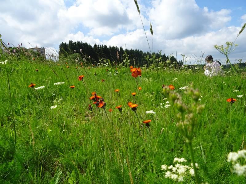 Buntenbocker Bergwiesenwanderweg